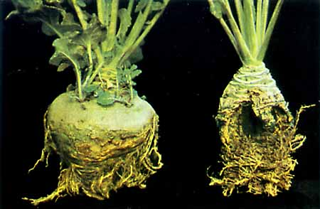Растения 6 8 ppm в здорового 63 ppm