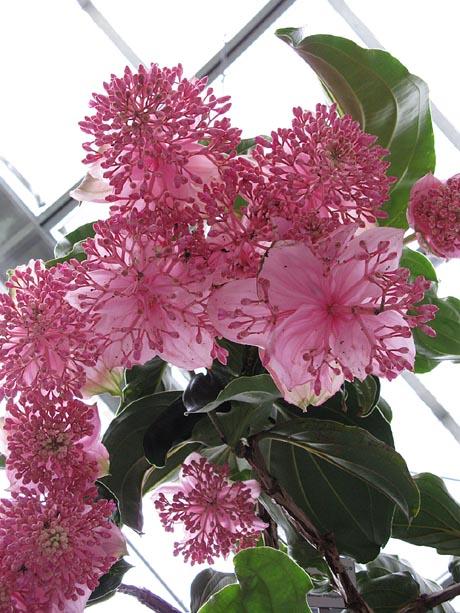 Германия выставка орхидей на Майнау.